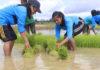 Mahasiswa Polbangtan Diharapkan Sukseskan Upsus Pajale Dukung Swasembada Pangan